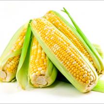bicolor-corn